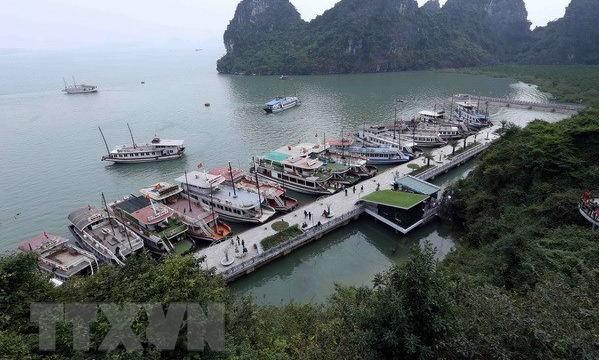 Quảng Ninh đình chỉ hoạt động 20 tàu du lịch trên Vịnh Hạ Long