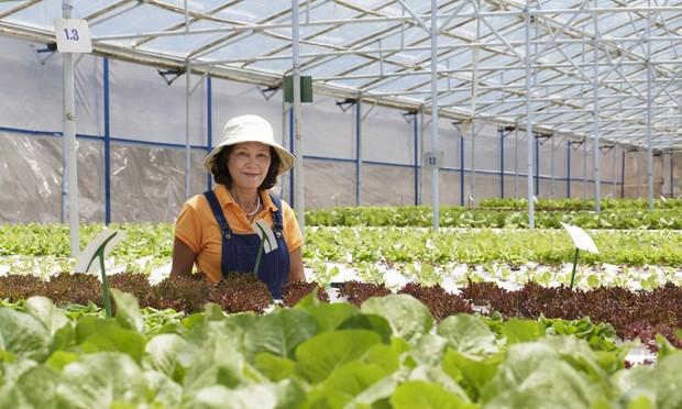 Tình yêu rau và nỗi niềm của chủ thương hiệu Rừng hoa Bạch Cúc