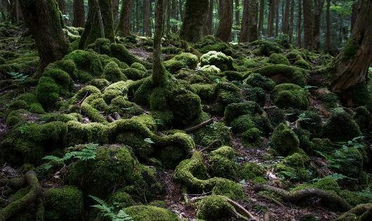"""""""Rợn tóc gáy"""" khu rừng tự sát ở Nhật Bản"""
