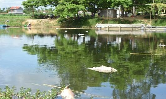 Hàng chục tấn cá nuôi lồng chết trên sông Bồ, người dân điêu đứng
