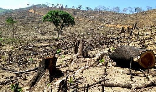 Vấn nạn phá rừng: Phải quy trách nhiệm  đến từng cá nhân