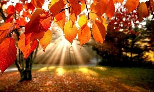 Bàn tay mùa thu