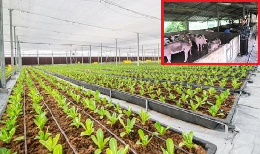 Không thể để gia đình văn hóa lại trồng rau hai luống, nuôi lợn hai chuồng