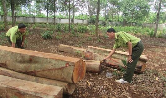 """Đắk Lắk: Kết luận thanh tra """"gọi tên"""" hàng loạt công ty lâm nghiệp để mất rừng"""