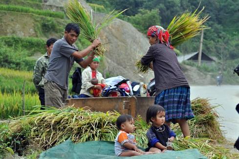 Kinh tế nông thôn: Tăng trưởng nhưng vẫn còn nhiều nỗi lo
