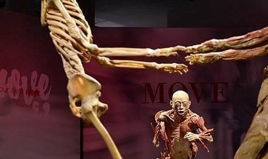 Yêu cầu giải trình về triển lãm 'Sự bí ẩn đặc biệt của cơ thể người'