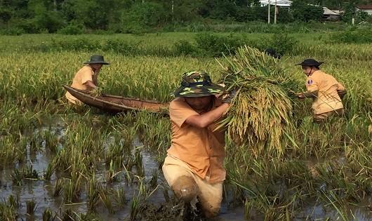 Công an Quảng Trị leo cây lội ruộng giúp dân khắc phục hậu quả bão
