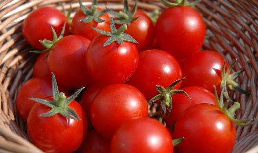 Kết quả hình ảnh cho cà chua tươi