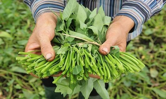 Những loại rau, quả, củ nguy cơ bị tẩm nhiều hóa chất