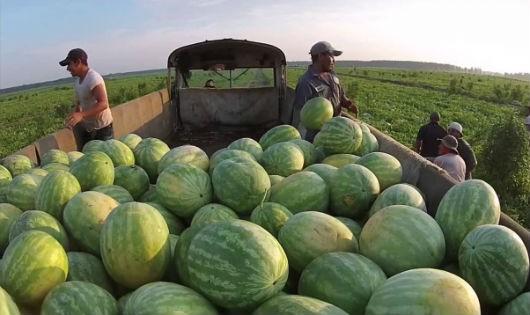 Ba lĩnh vực tạo đột phá cho nông nghiệp