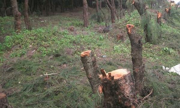 """Dự án thuỷ điện và khai thác khoáng sản """"ăn"""" rừng phòng hộ?"""