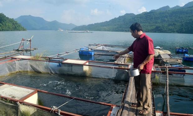 Nuôi cá lồng trên lòng hồ sông Đà đang đem lại hiệu quả cao cho cả người dân lẫn doanh nghiệp