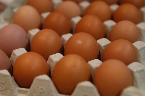 Trải nghiệm ăn kiêng hoàng gia: 9 quả trứng một ngày