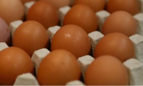 Nhật Bản sản xuất loại gà đẻ trứng chống ung thư