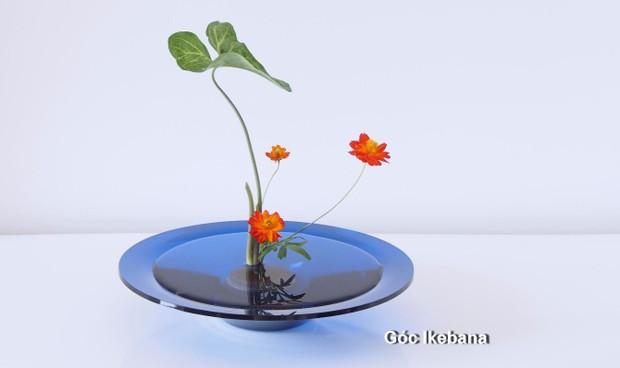 Cô gái mang nghệ thuật cắm hoa Ikebana về Việt Nam