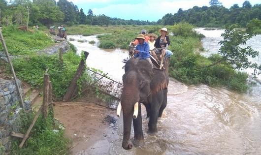 Để dành rừng vì voi