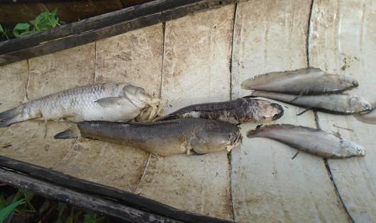 Quảng Trị: Cty TNHH Dệt may Vinatex Quốc tế Toms xả thải, cá chết bất thường