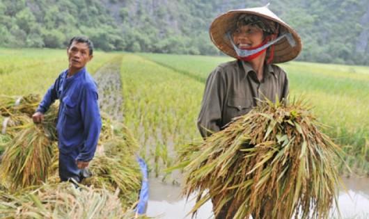 Xin cho biết mức đóng BHXH hàng tháng đối với nông dân?