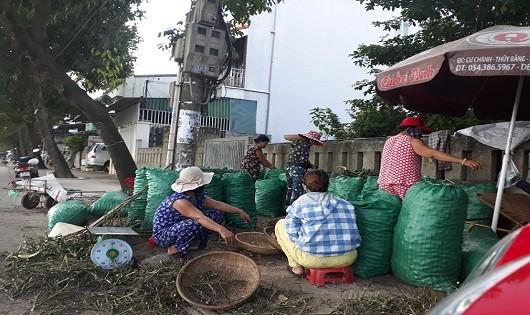 Thương lái đổ xô mua cau non bán sang Trung Quốc