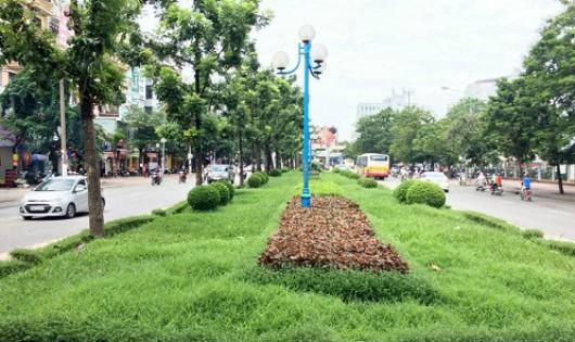 Hà Nội: Không loại trừ yếu tố phá hoại trong việc cháy cây cảnh, thảm cỏ