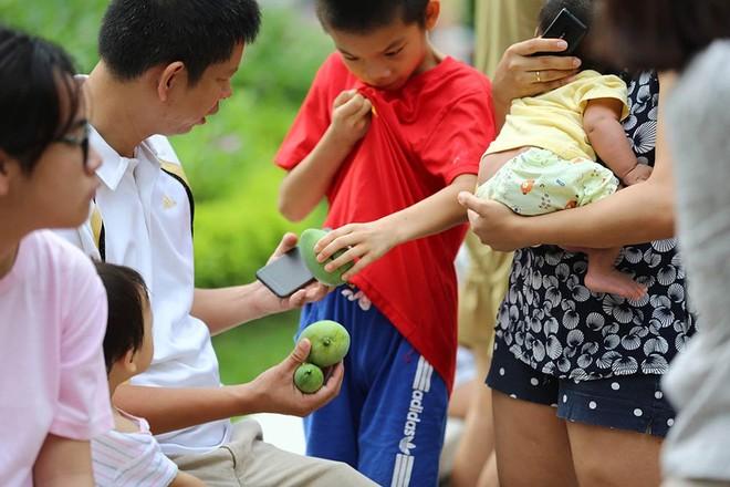 hoa quả Việt,đặc sản Việt,xoài,Hà Nội