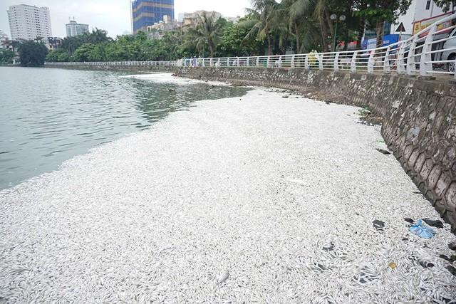 Ven đường Trích Sài (hồ Tây) cá nổi kín một góc hồ bốc mùi hôi thối khủng khiếp.