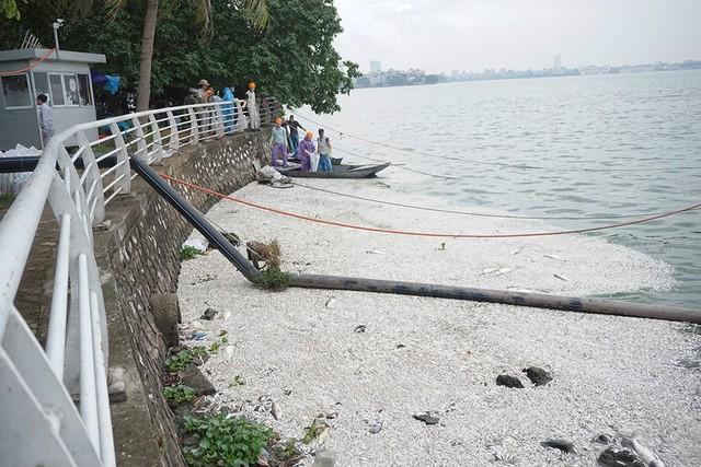 Trong sáng nay (9/7) các công nhân môi trường tiếp tục vớt cá. Được biết hiện tượng cá chết xuất hiện từ ngày hôm qua.