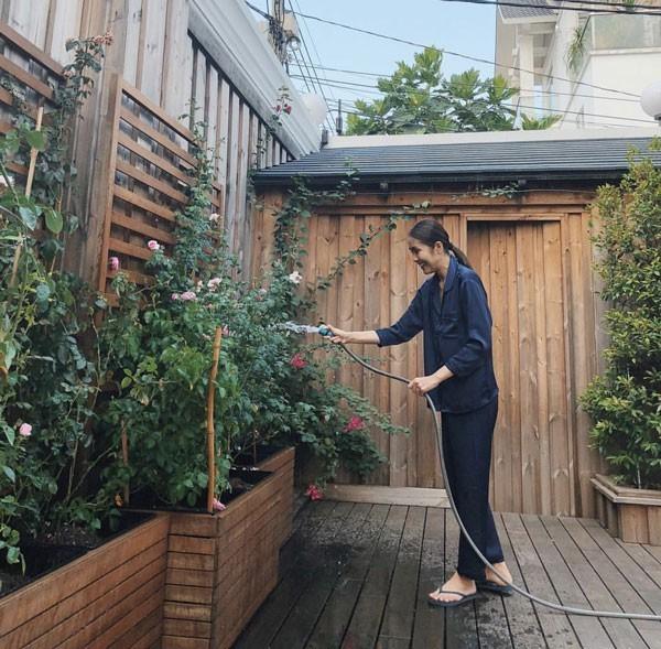 Hà Tăng cũng thường xuyên khoe khu vườn hoa hồng do chính cô chăm sóc.