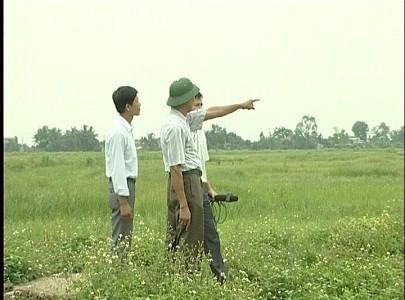 Ruộng lúa biến thành cỏ hoang