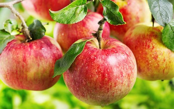 ung thư, ung thư ruột kết, ung thư vú, ung thư dạ dày, ung thư gan, hoa quả, trái cây chống ung thư