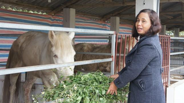 Gặp nữ chủ nhân công viên ngựa bạch Tây Tạng bên triền đê sông Hồng