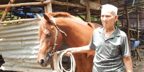 Huyền thoại ngựa đua náu nghĩa trang chờ thời