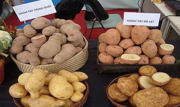 Lâm Đồng: Ngăn chặn hàng nông sản Trung Quốc giả nông sản Đà Lạt