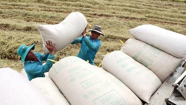 """Tung vốn mua 20 vạn tấn gạo ở ĐBSCL: """"Neo"""" giá, chờ đơn hàng lớn"""