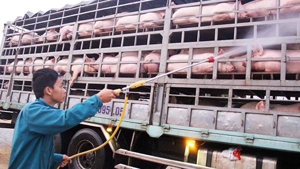 """Dịch tả lợn châu Phi: Bộ NN&PTNT """"hối"""" Bộ Tài chính kinh phí chống dịch"""