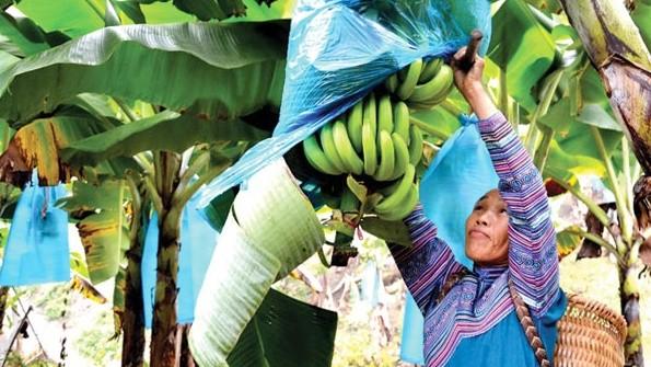 Mường Khương (Lào Cai): Núi rừng rộn ràng vươn lên đổi mới