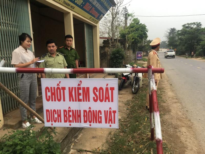 Quản lý thị trường Thanh Hóa tích cực phòng chống dịch tả lợn Châu phi