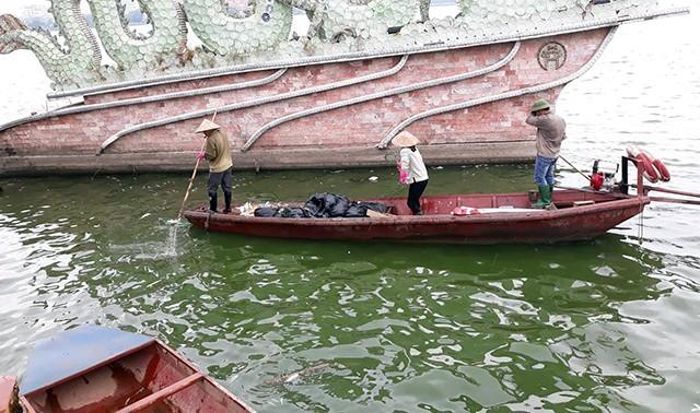 Sáng nay, hàng chục công nhân được huy động vớt cá chết ở Hồ Tây. (Ảnh: Phạm Công)
