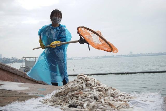 Trao đổi với PV, chị Hạnh - một người dân ven hồ cho biết, hiện tượng cá chết bắt đầu từ ngày 8/7 và chết nhiều vào đêm 8/7.