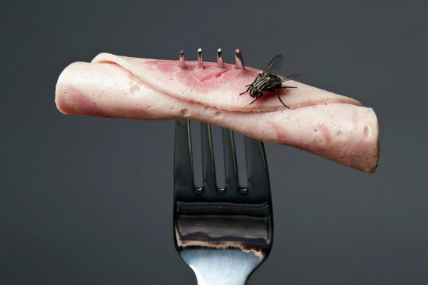 Điều gì xảy ra khi ruồi đậu vào thức ăn của bạn?