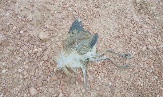 Bất chấp lệnh cấm, giăng cả ngàn mét lưới để bẫy chim ở Hạ Long