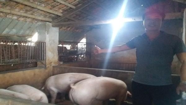 """Vụ nghi ngờ """"trục lợi từ dịch tả lợn Châu Phi"""" tại Hải Dương: Chính quyền xã và người mua lợn phân trần"""