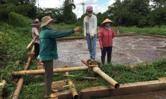 """Đắk Lắk: Cả làng """"nhịn thở"""" vì nhà máy chế biến mủ cao su đổ bùn thải ra môi trường"""