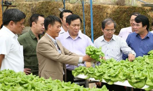 Thiếu hợp tác xã, nông dân và doanh nghiệp 'chơi vơi'