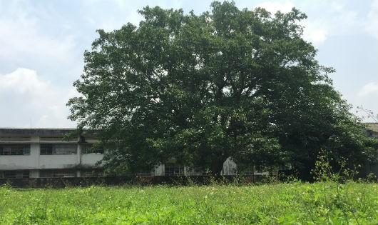 """Diễn biến sự việc liên quan """"khu đất lịch sử"""": Bộ Nông nghiệp phản bác báo cáo của Đồng Nai"""