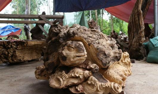 Làm giàu nhờ 'rác của rừng'