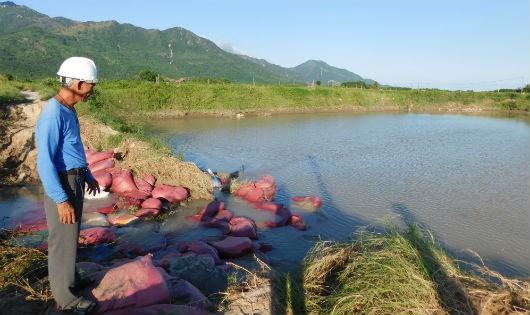 Nước mắt làng nuôi trồng thủy sản sau lũ
