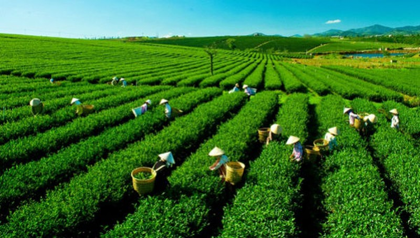 Bộ Nông nghiệp lưu ý một số vấn đề về thị trường nông sản