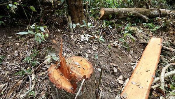 Giải pháp gì để lệnh đóng cửa rừng được thực hiện nghiêm túc?