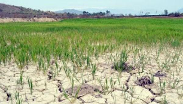 Tây Nguyên bắt đầu thiếu nước nghiêm trọng